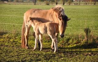 Cultuurgrondvrijstelling voor ponyfokkerij