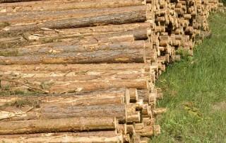 Geen MIA door gebruik niet gecertificeerd hout